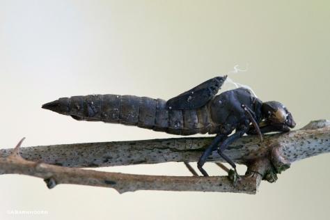 mummylibelle